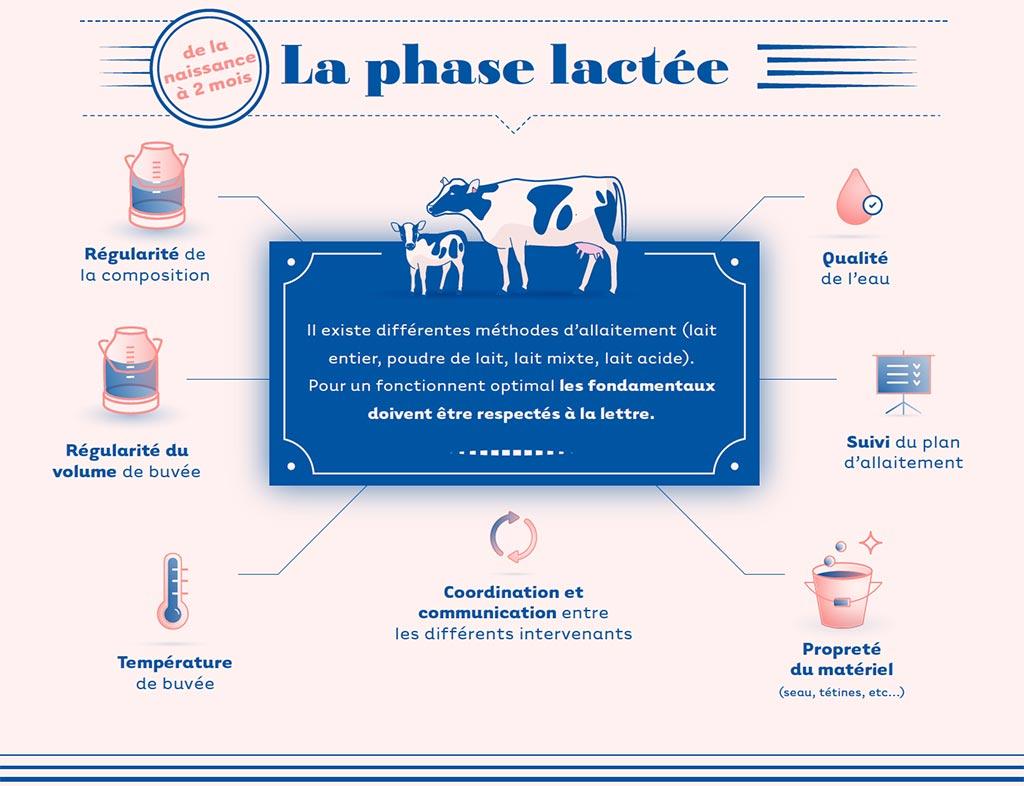 infographie cniel phase lactee de la vache